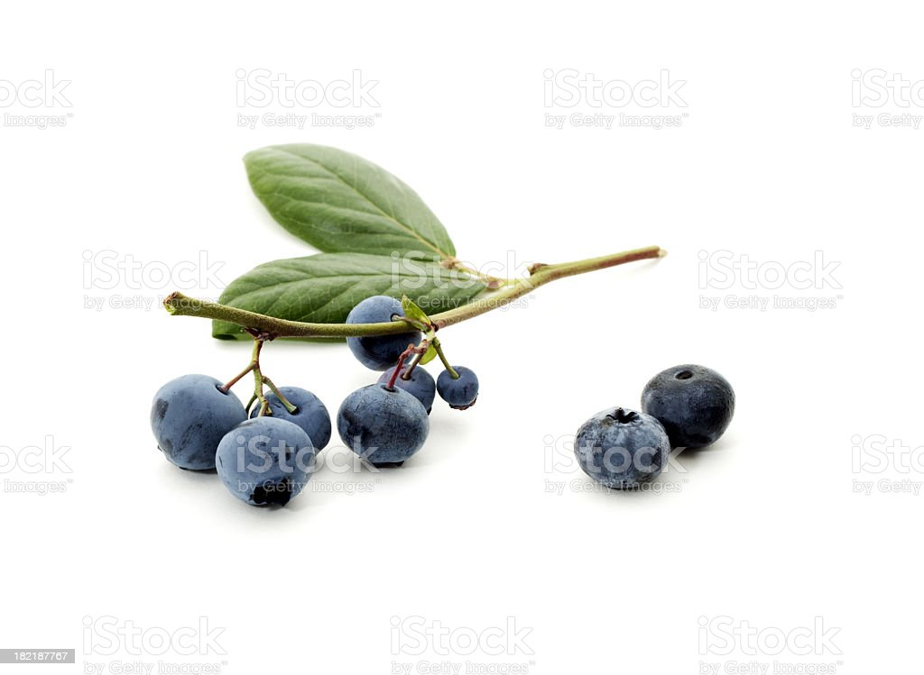 Fresh picked blueberries on a stem stock photo