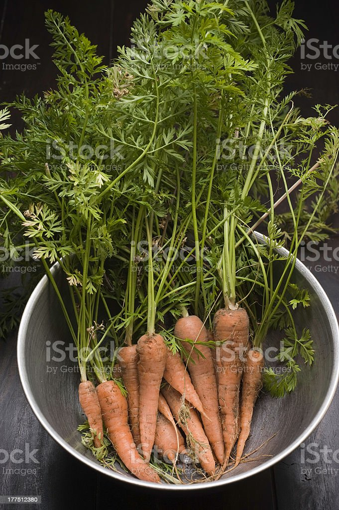 Fresh Picked Carrots royalty-free stock photo