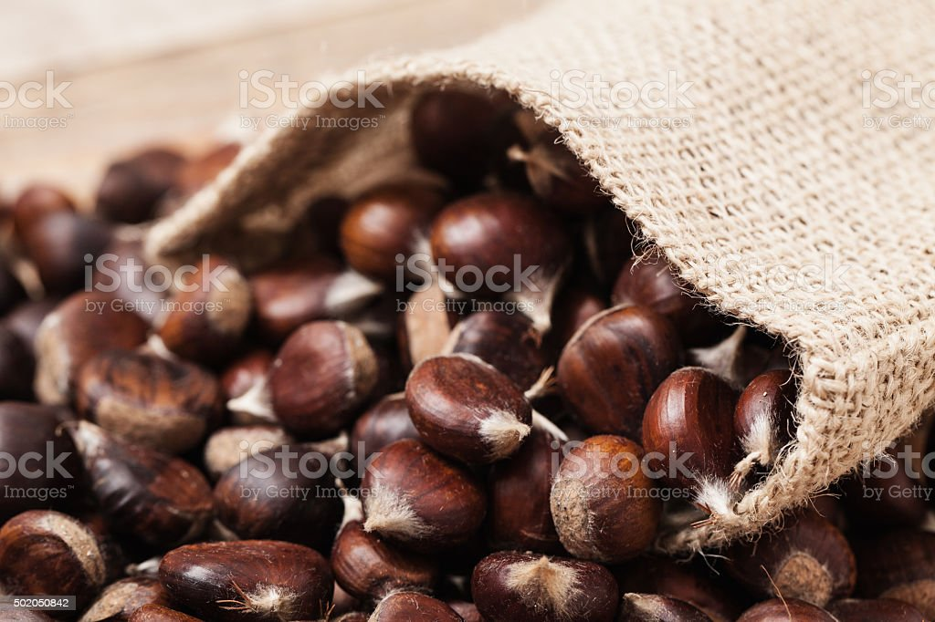 Fresh picked chestnut fruits in jute sack, close up stock photo
