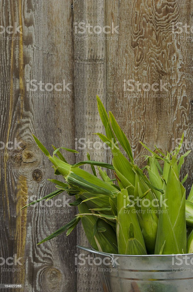 Fresh picked corn in silver tub w/barnwood background-copy spaceCorn Harvest stock photo