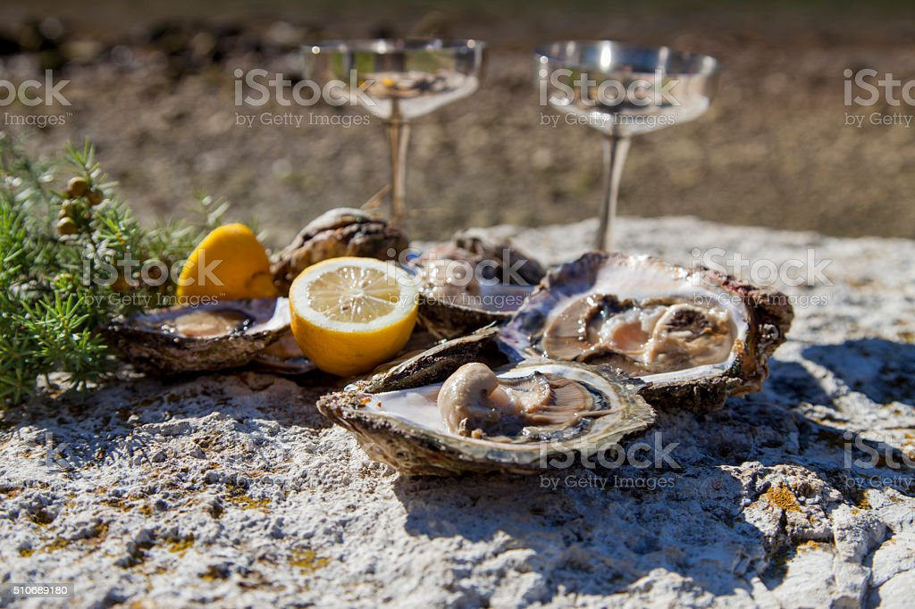 Fresh picked oysters on sea coast with silver glasses stock photo