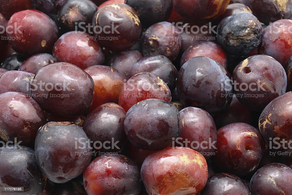 Fresh Picked Plums royalty-free stock photo