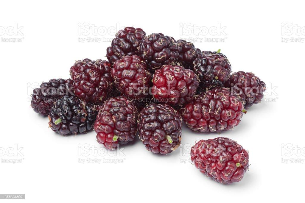 Fresh picked ripe mulberries stock photo