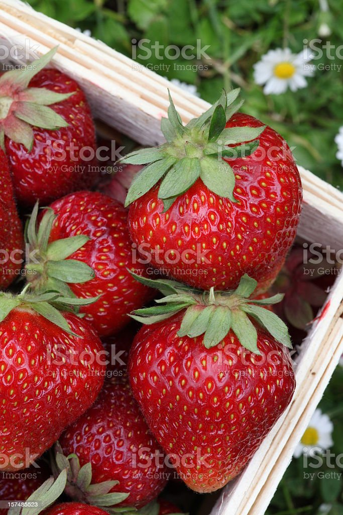Fresh picked strawberries in a basket stock photo