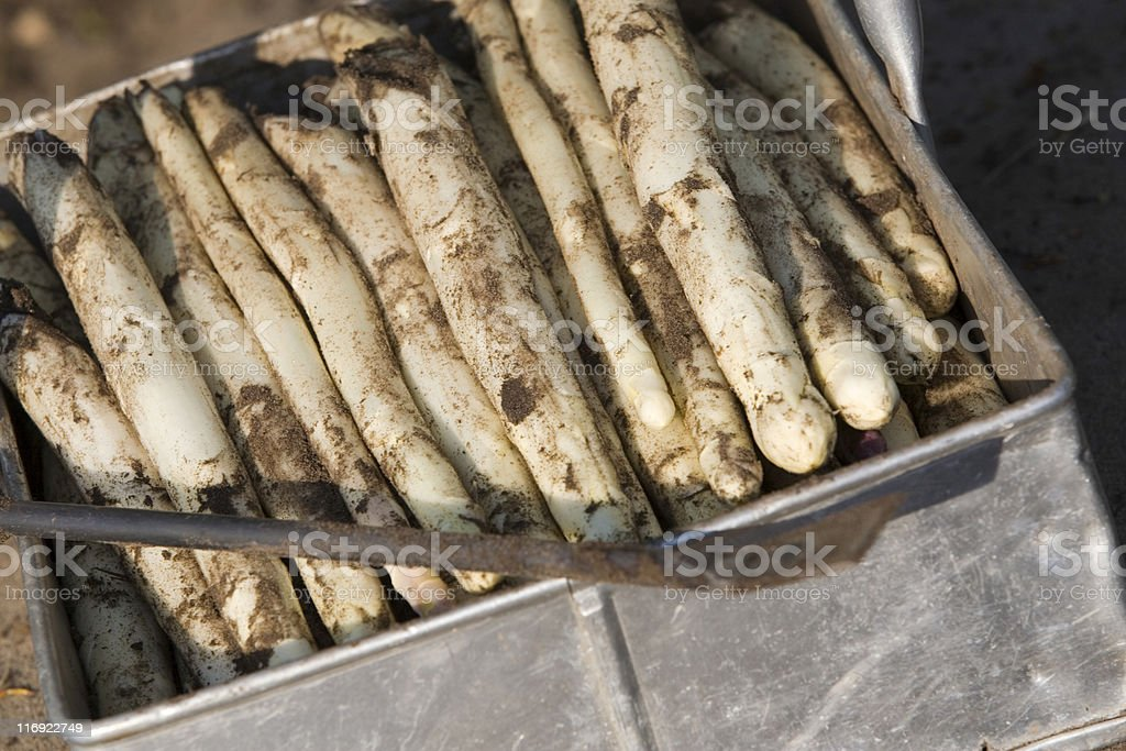 fresh picked white asparagus royalty-free stock photo