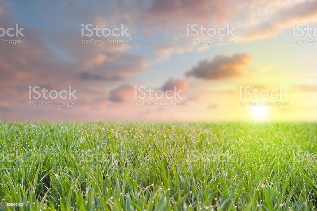 Fresh stock photo