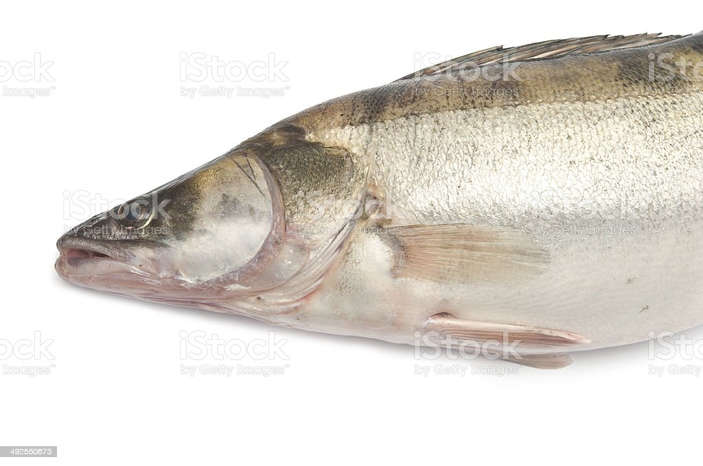 fresh pike perch isolated on a white background stock photo
