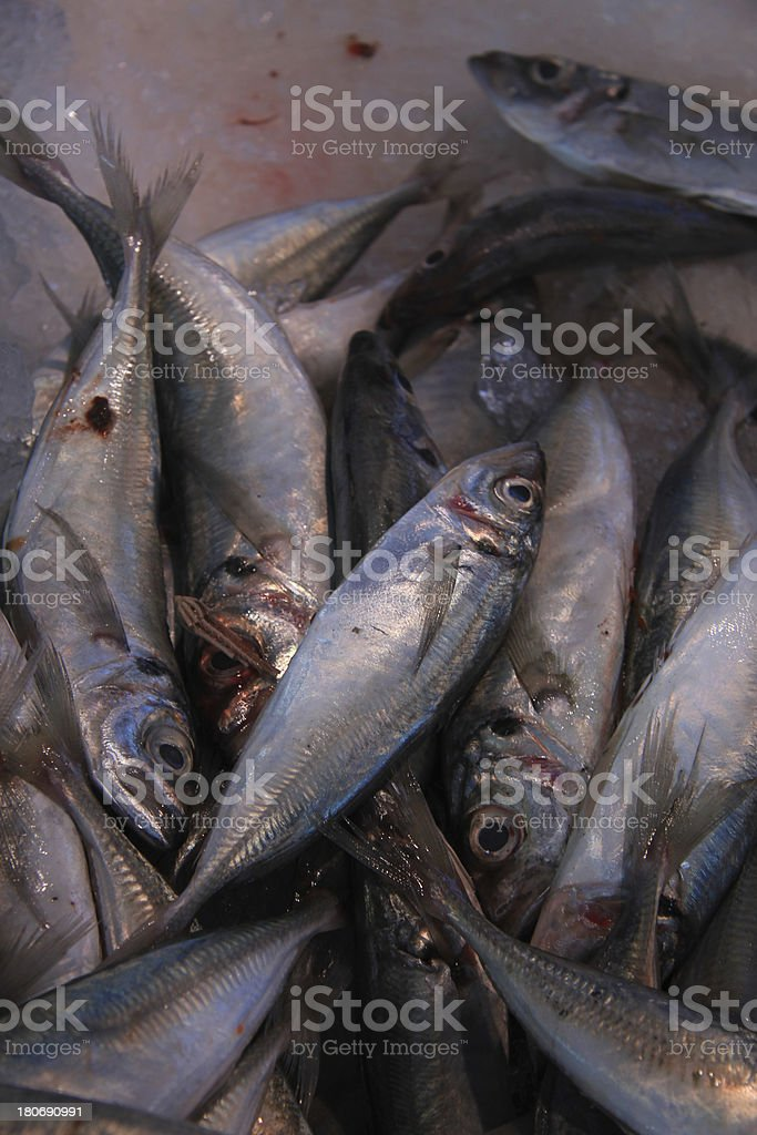 Fresh pilchards at a market royalty-free stock photo