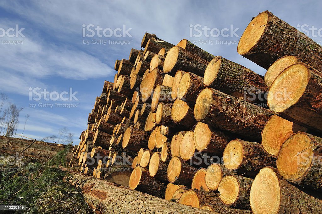 Fresh piled tree stock photo