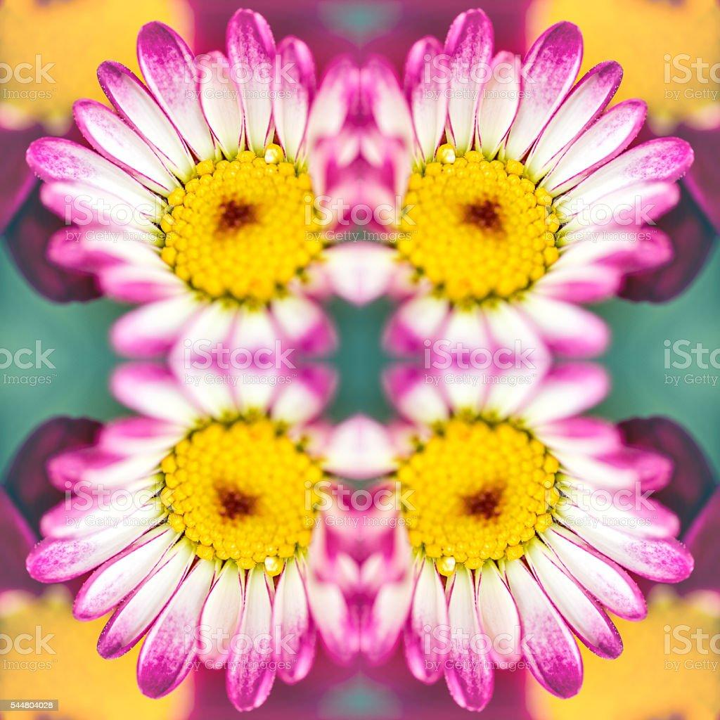 rose frais anthemis fleurs macro forme symétrique surréaliste