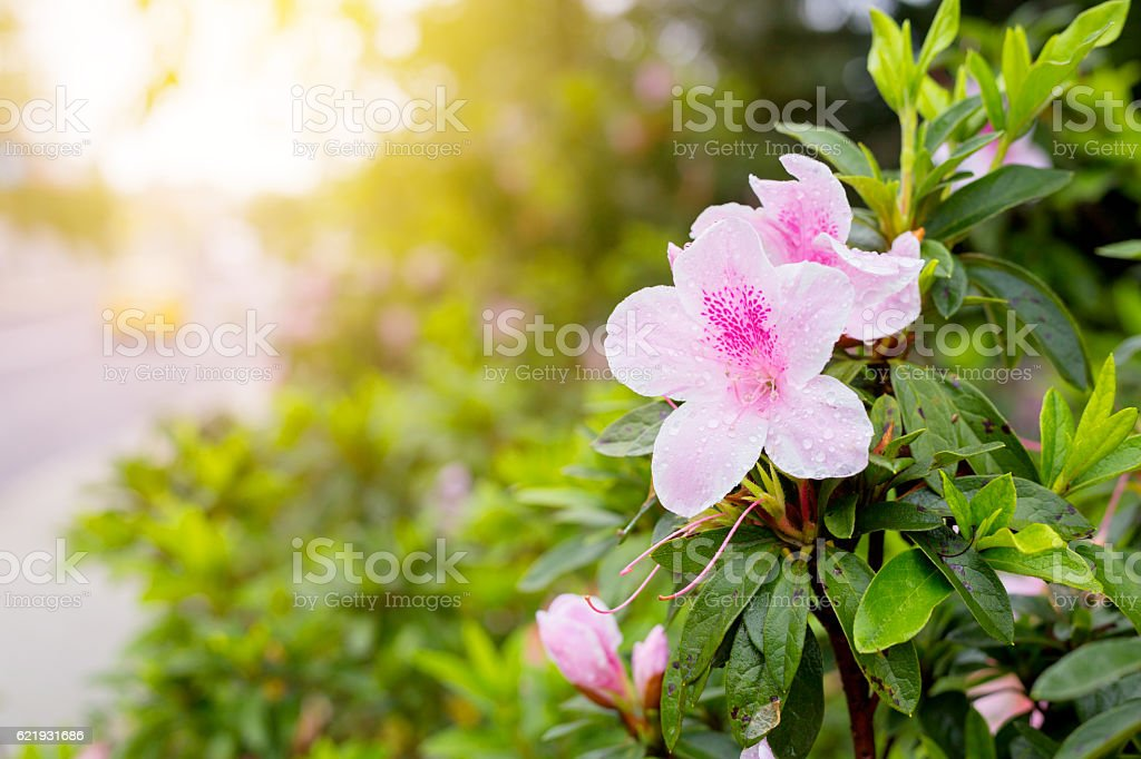 fresh pink flower Close up  shot in public park stock photo