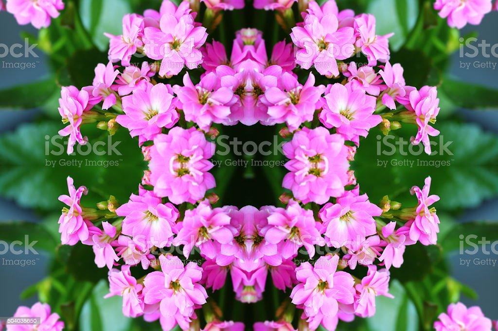 Fresh pink Kalanchoe flowers surreal shaped symmetrical kaleidoscope stock photo