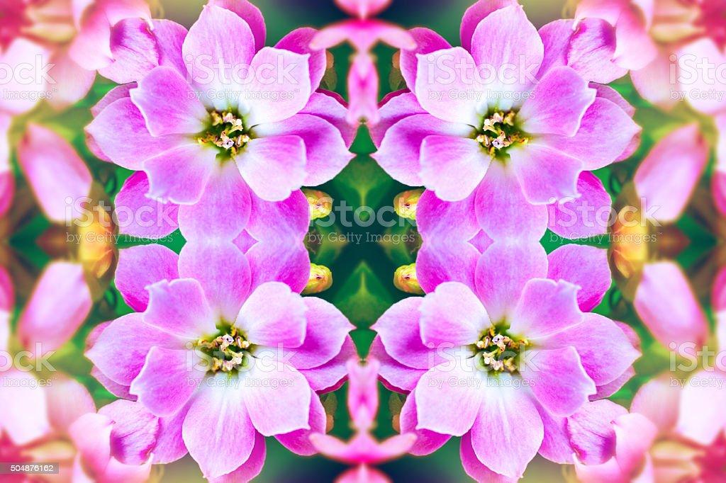 rose frais kalanchoé fleurs en forme symétrique surréaliste