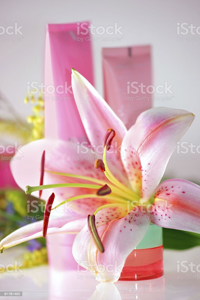 Fresh pink lily and cream royalty-free stock photo