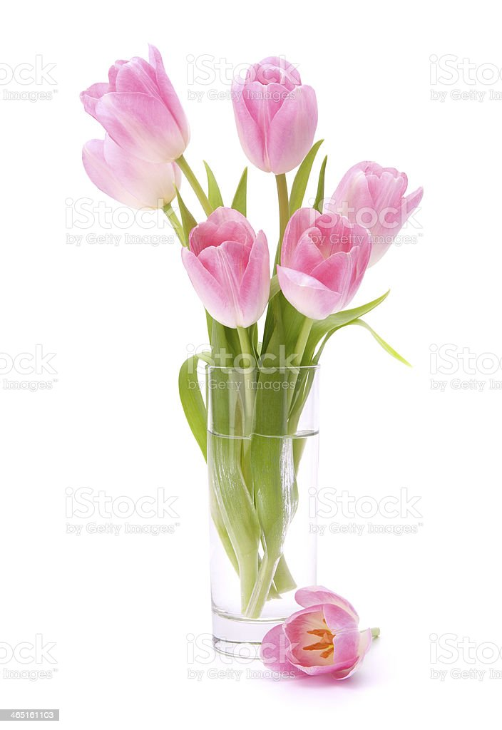 Fresh pink tulips bouquet in vase royalty-free stock photo
