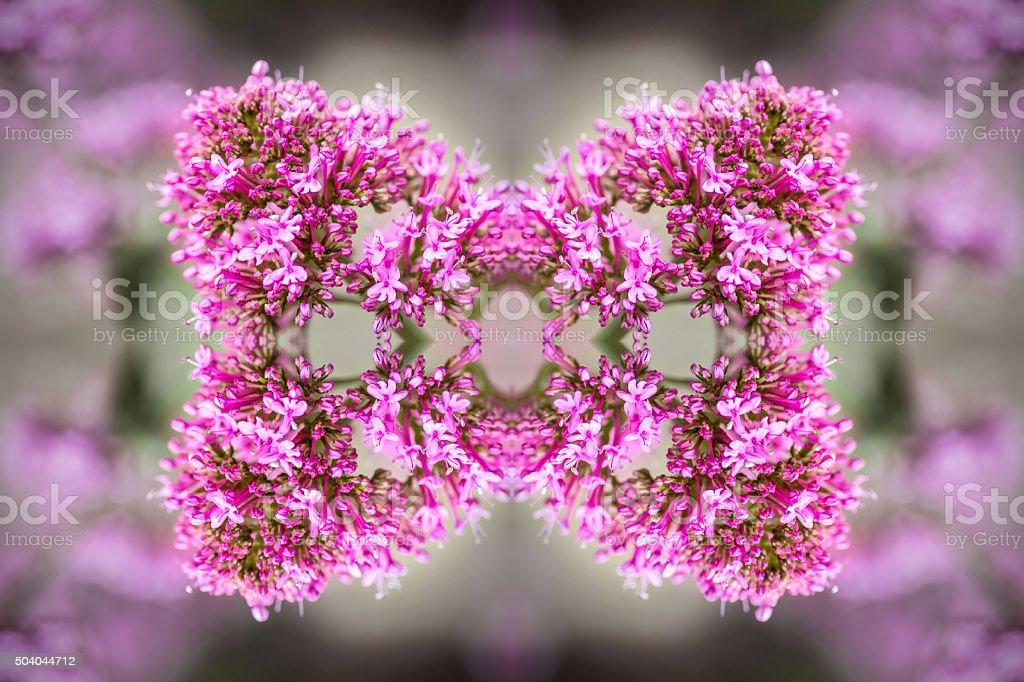 rose frais valériane forme symétrique surréaliste kaléidoscope de
