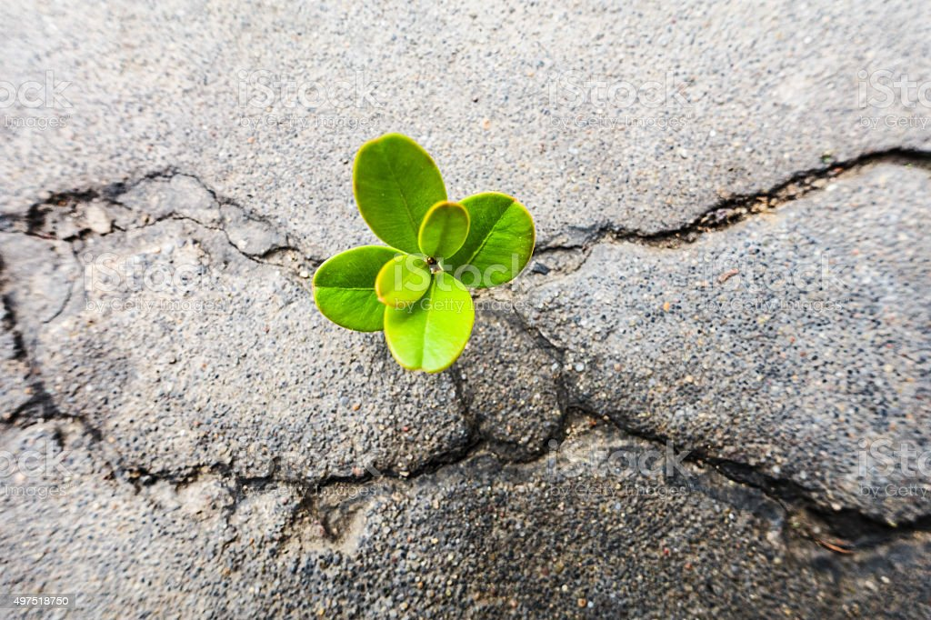 Fresh plant growing out of concrete stock photo