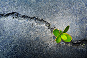 Fresh plant growing out of concrete