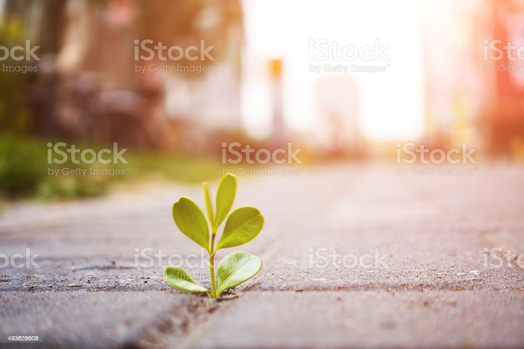 fresh plant growing out of ground stock photo