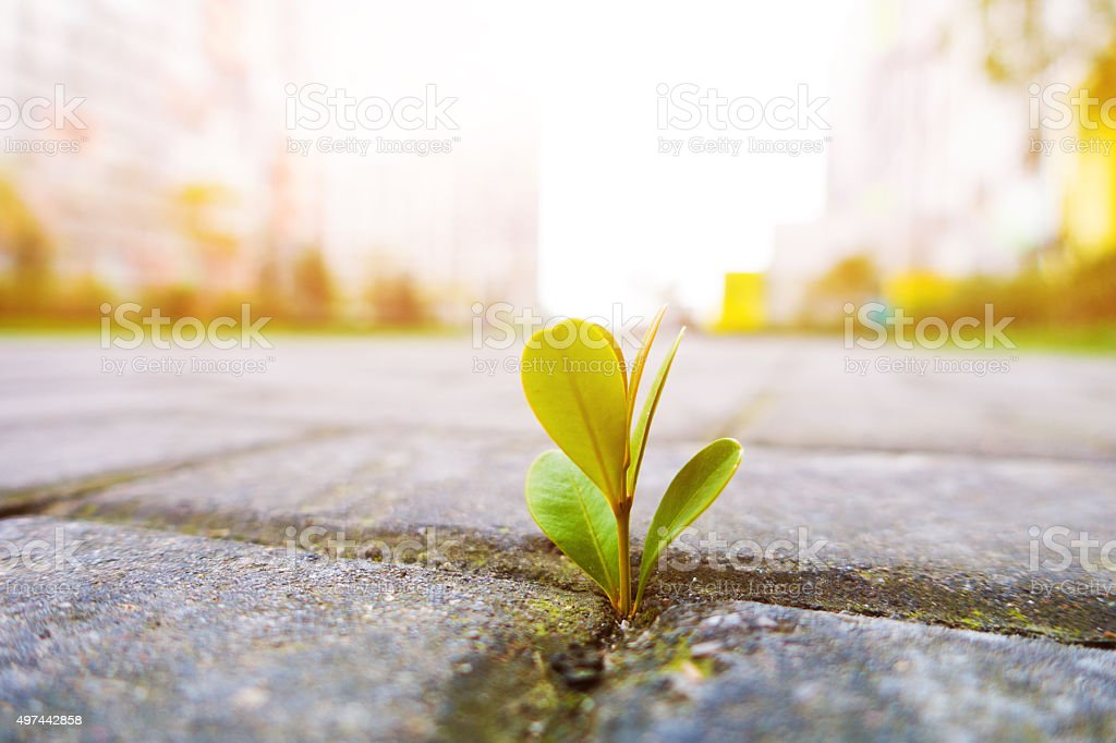 Fresh plant growing stock photo
