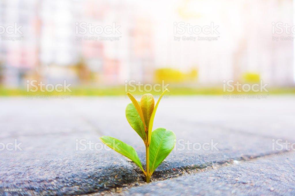 Fresh plant growing stock photo