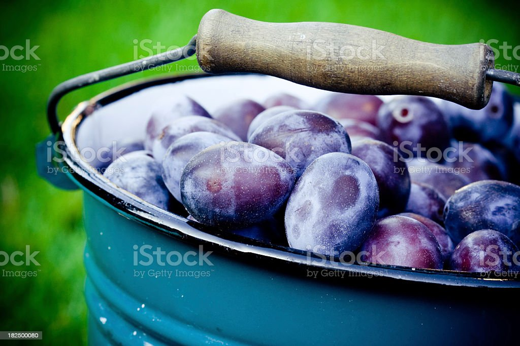 Fresh plums close-up stock photo
