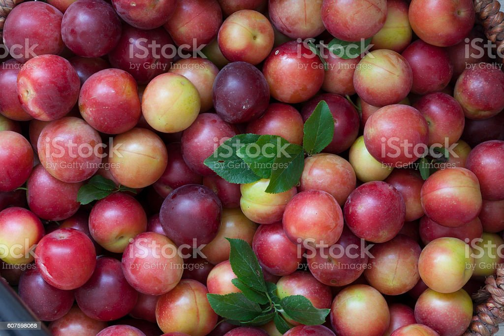 Fresh plums in the basket stock photo