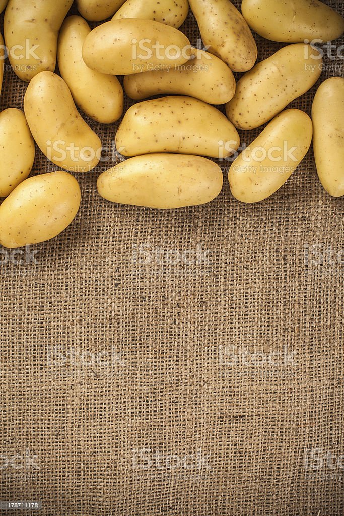 Fresh potatoes on a canvas background, place for text stock photo