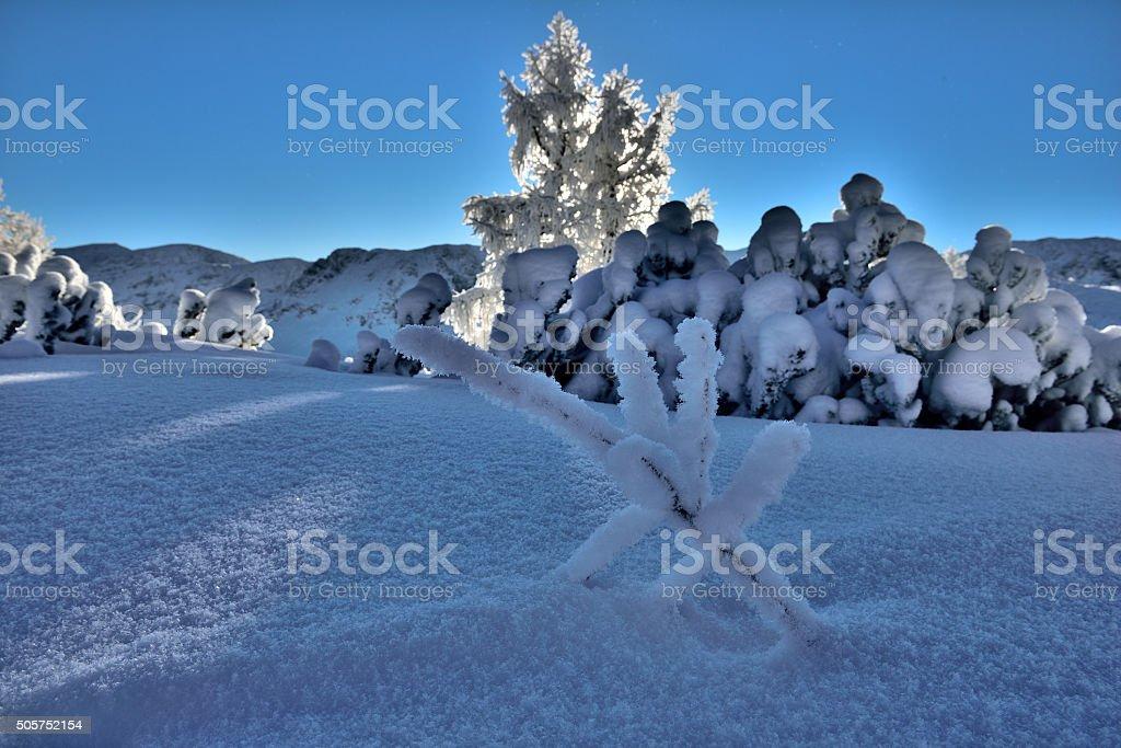 Fresh powder snow in the morning stock photo