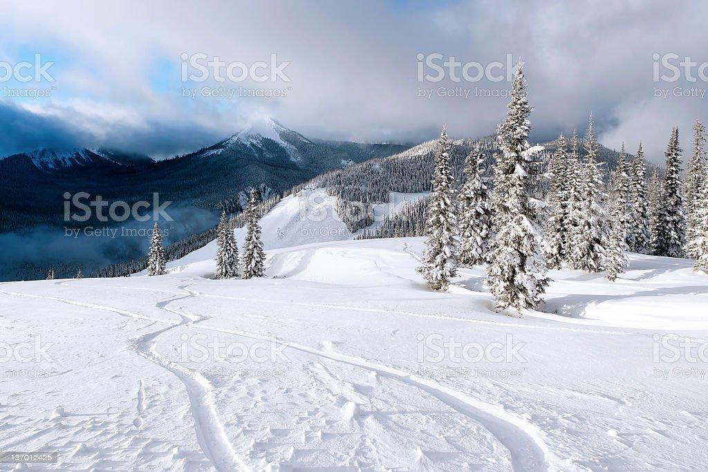 XXL fresh powder snowboard tracks stock photo