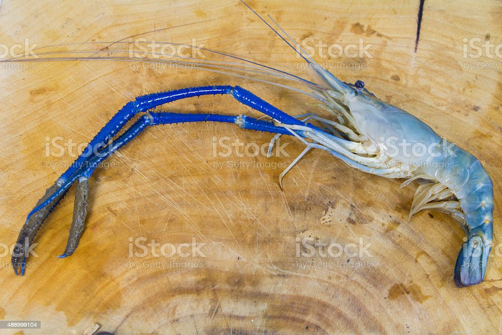 Fresh prawn from river stock photo