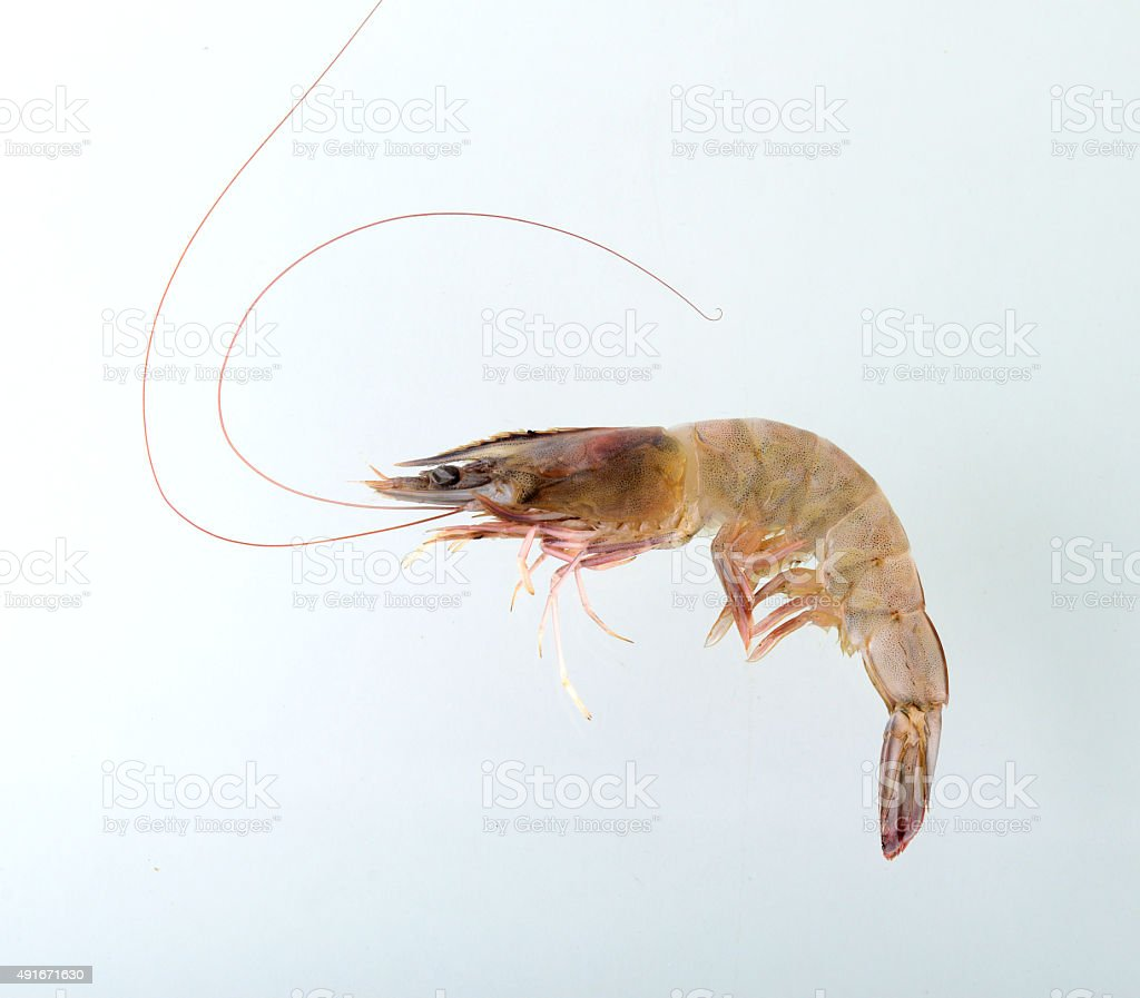 Fresh Prawn or Shrimp Isolated on white background stock photo