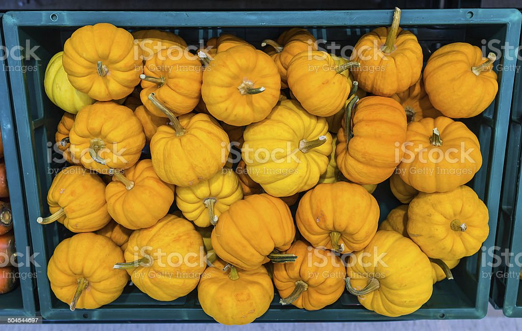 Fresh Pumpkin stock photo