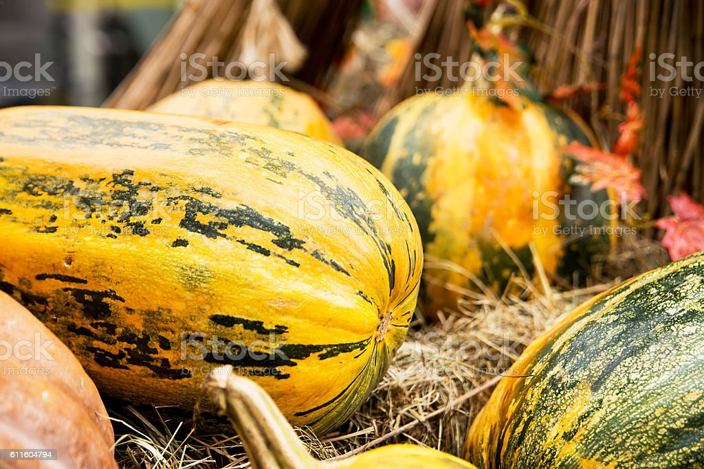Fresh pumpkins and hey. Autumn harvest at October stock photo