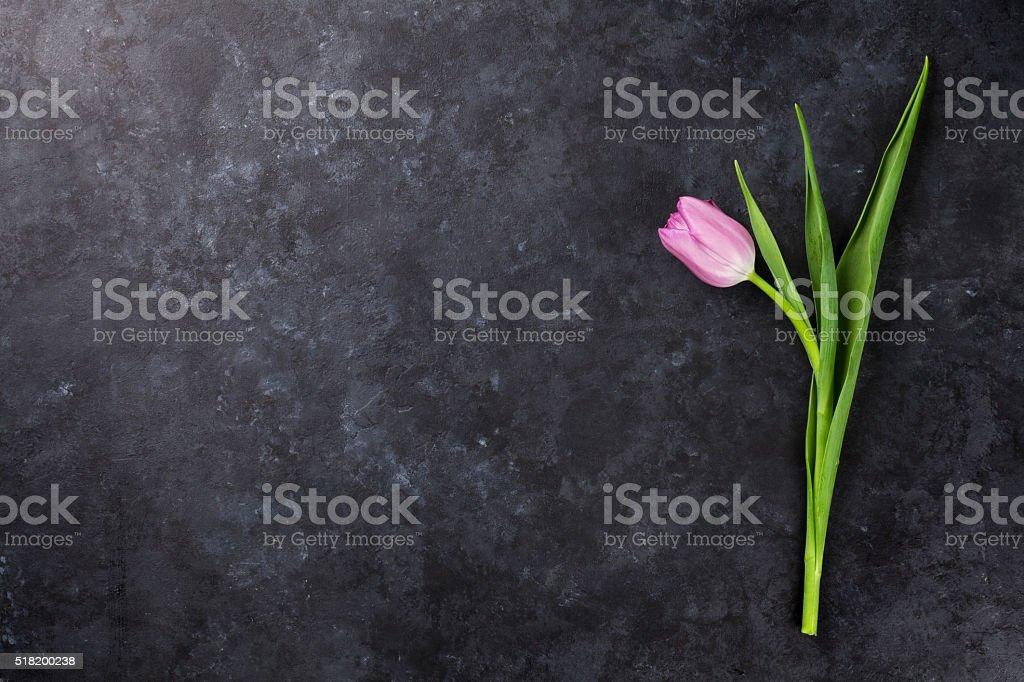 Fresh purple tulip flower stock photo