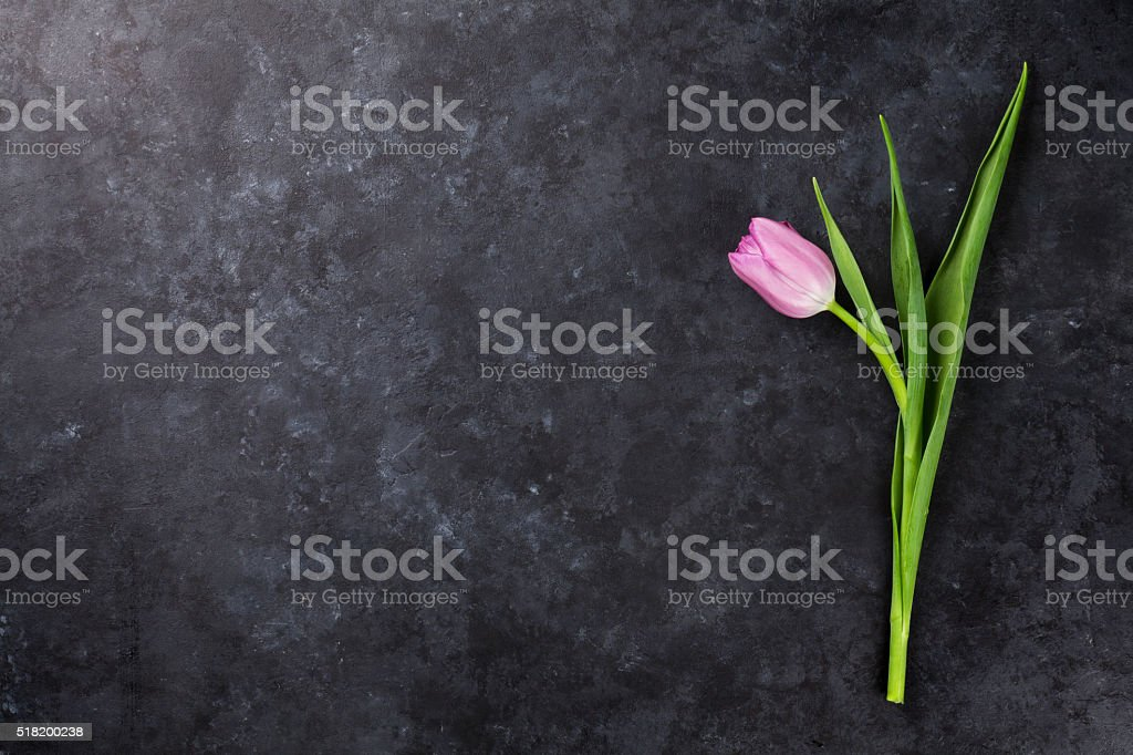 Fresh purple tulip flower stock photo