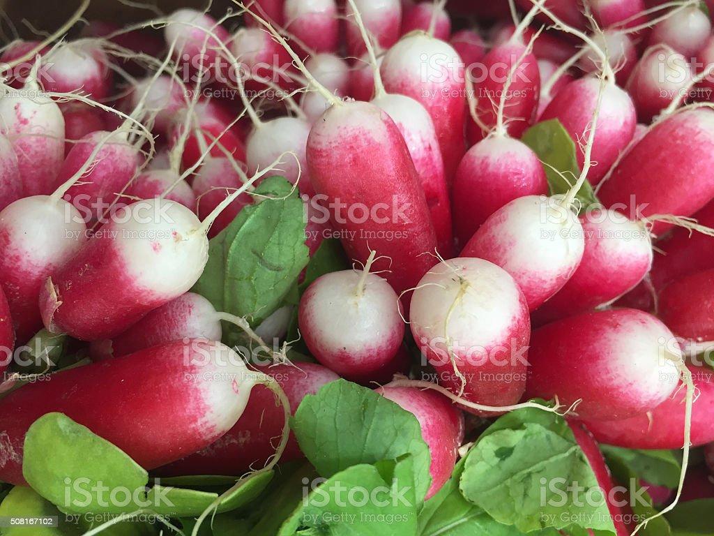 fresh raddishes stock photo