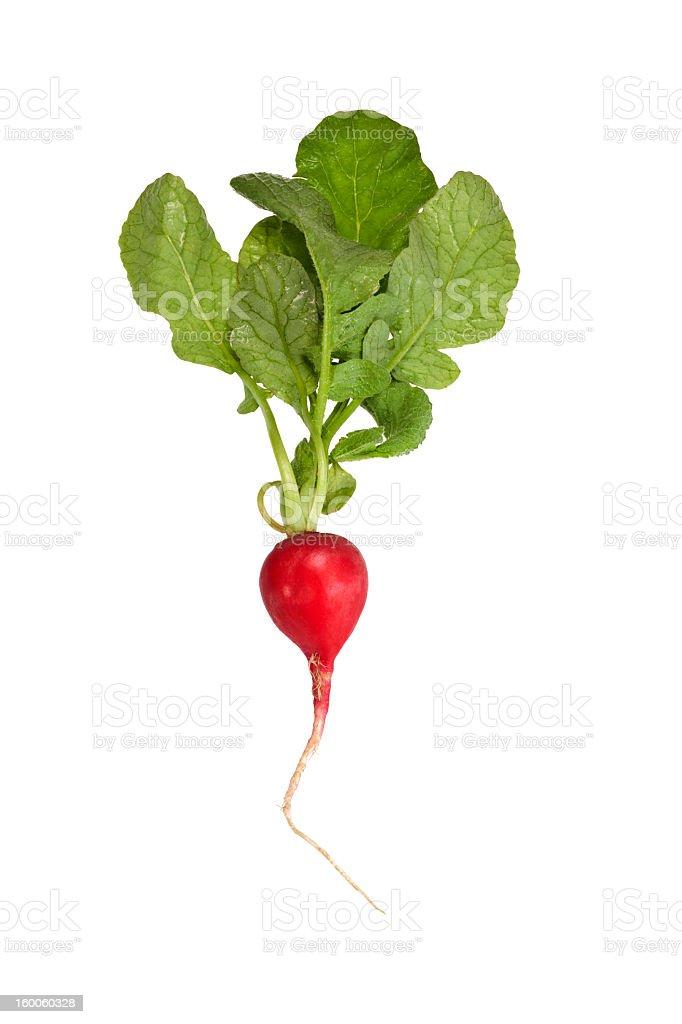 Fresh radish isolated on white stock photo