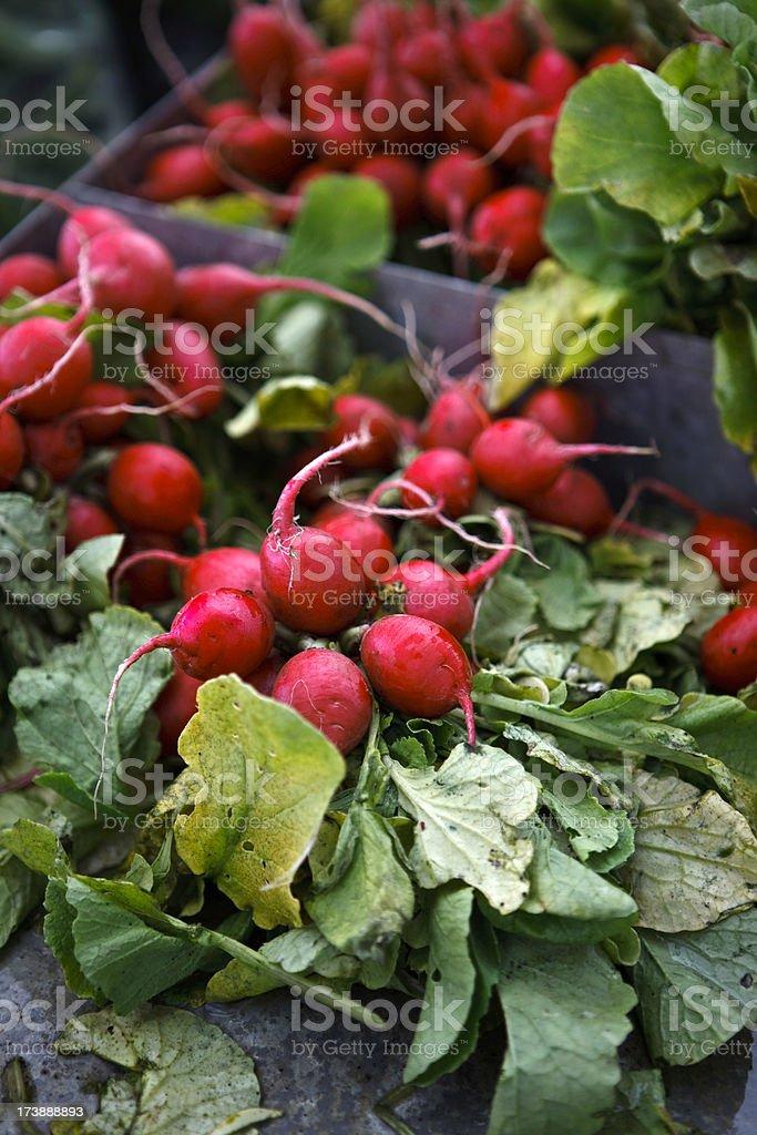 fresh radish royalty-free stock photo