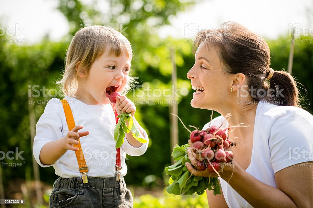 Fresh radishes are delicious stock photo