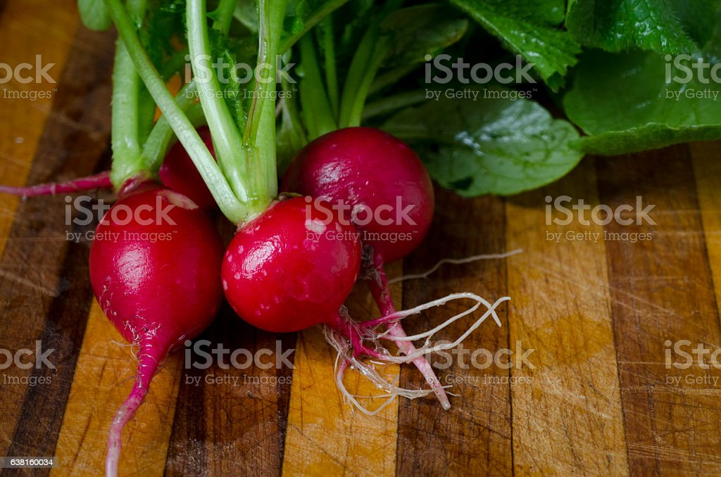 Fresh Radishes' from the Garden stock photo