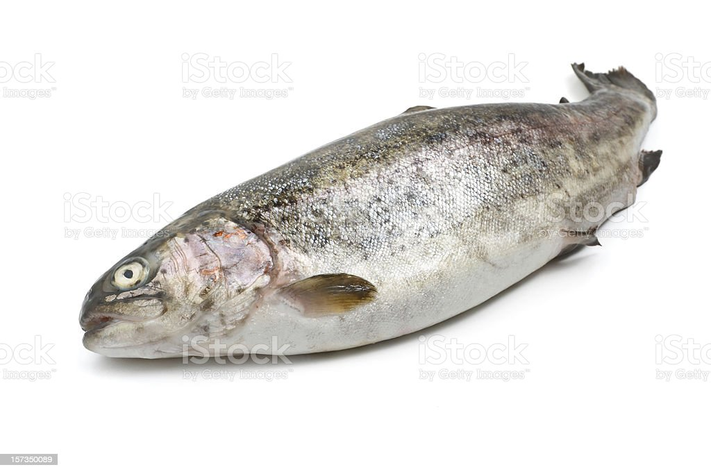 fresh rainbow trout royalty-free stock photo