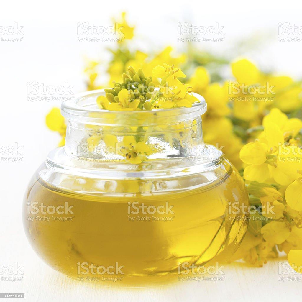 fresh rapeseed oil stock photo