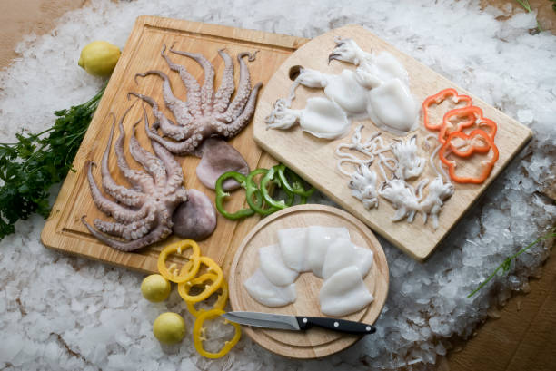 baby octopus stock photos - photo #46