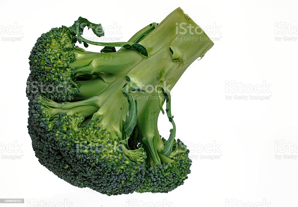 fresh raw broccoli for cropping stock photo