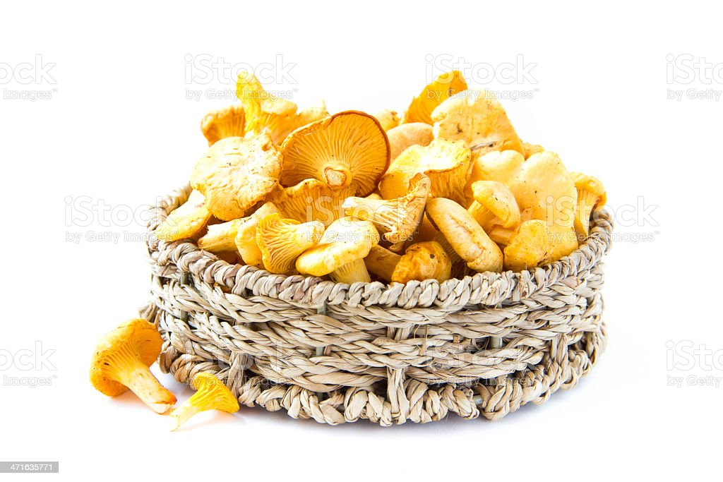 Fresh, raw chanterelles mushrooms  in basket, great harvest royalty-free stock photo