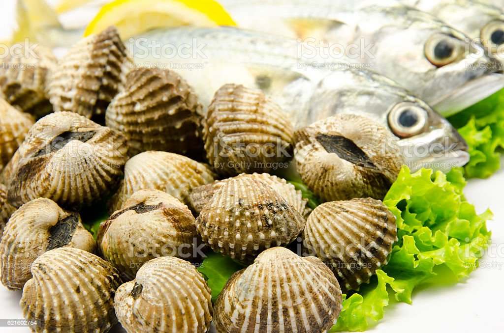 Fresh raw clams stock photo