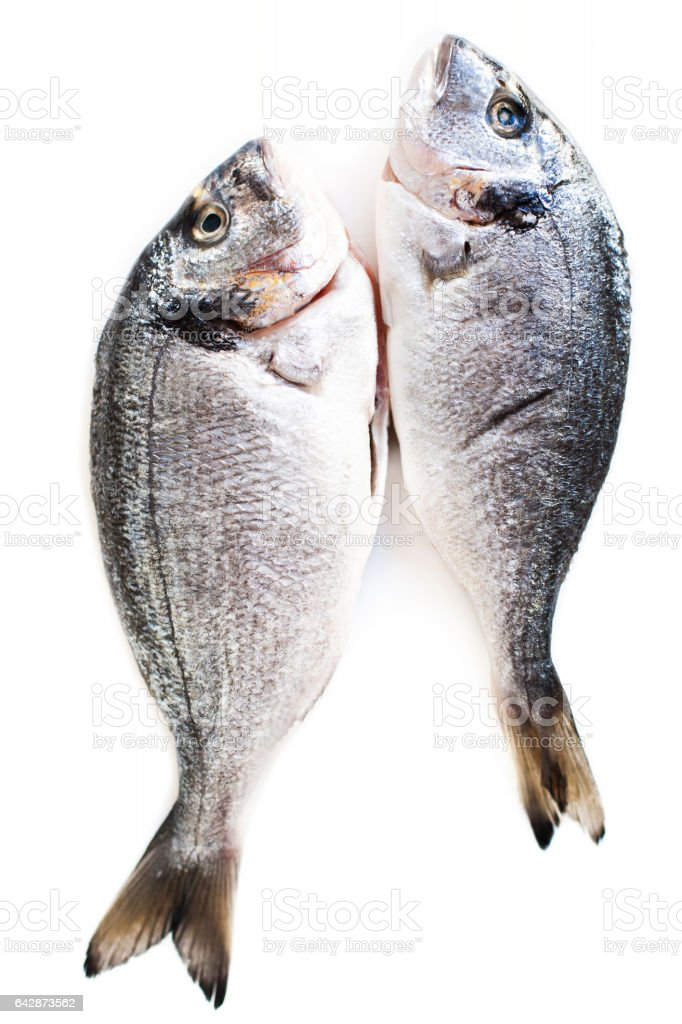 Fresh raw dorado fish isolated on white background stock photo