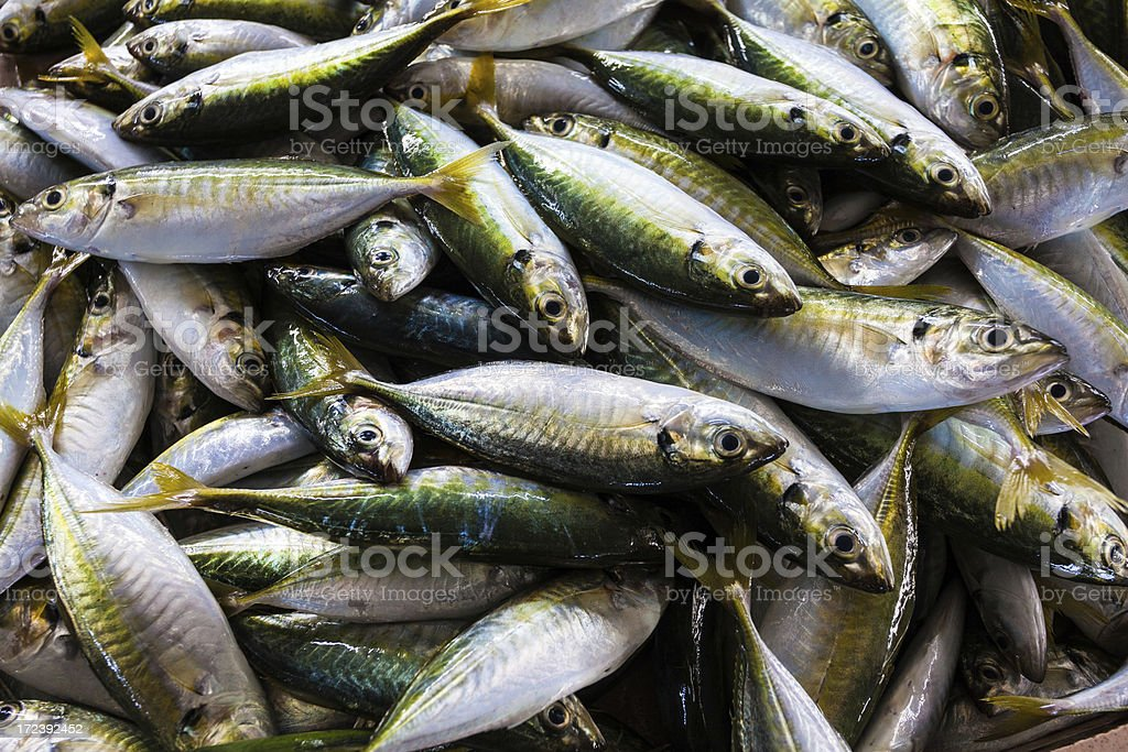Fresh Raw Fish royalty-free stock photo