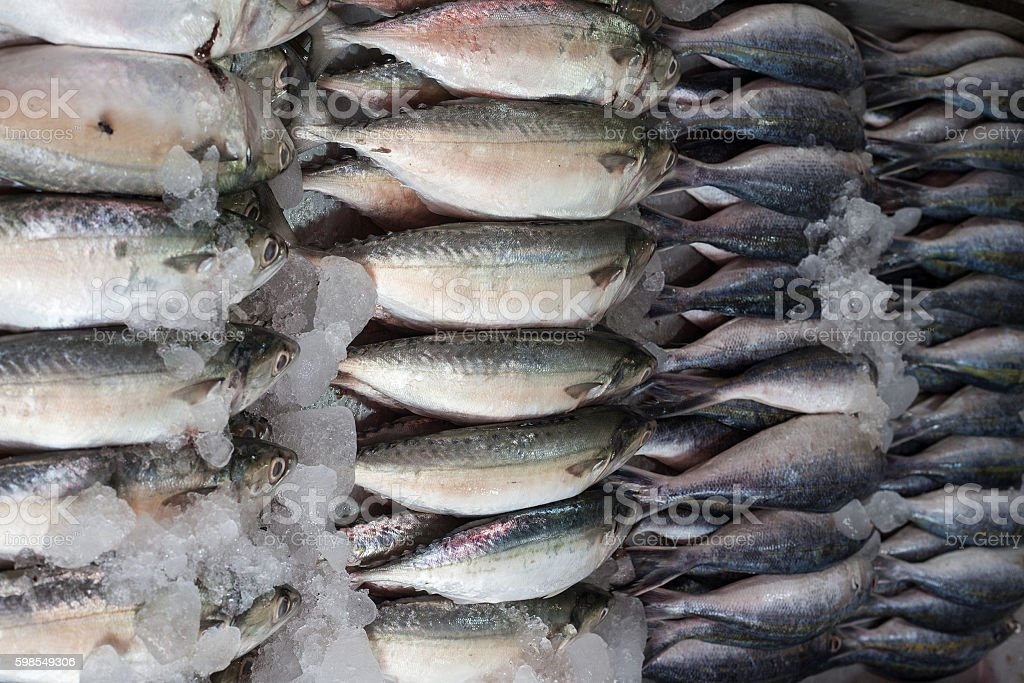 Fresh raw Mackerel fish in the market stock photo
